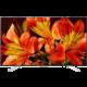 Sony KD-55XF8505 - 139cm  + Blu-ray přehrávač Sony UHP-H1B (v ceně 8000 Kč) + Voucher až na 3 měsíce HBO GO jako dárek (max 1 ks na objednávku)