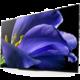 Recenze: Sony KD-55AG8 – obrazové HiFi