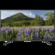 Sony KD-43XF7005 - 108cm  + Voucher až na 3 měsíce HBO GO jako dárek (max 1 ks na objednávku)