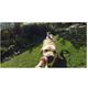 GoPro Fetch (Psí postroj)
