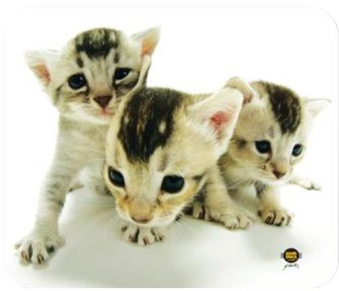 Allsop Hana Deka kočky