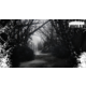 Kholat: Mrtvá hora - PC