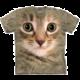 The Mountain Kitten Face (US L / EU XL)