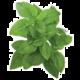 Click and Grow Smart Garden sazenice Bazalka pravá (trpasličí, řecká)