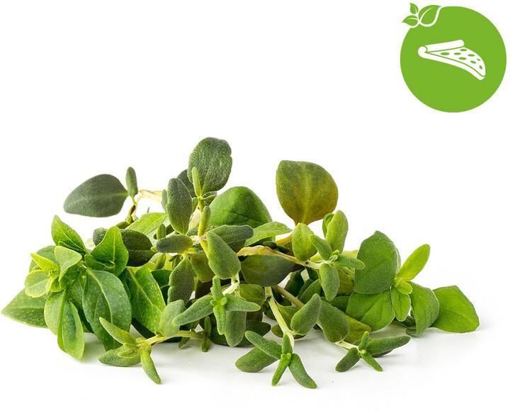 Click and Grow Smart Garden sazenice mix italských bylin