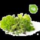 Click and Grow Smart Garden sazenice mix steak&grill