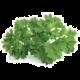 Click and Grow Smart Garden sazenice Petržel