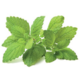 Click and Grow Smart Garden sazenice Meduňka lékařská