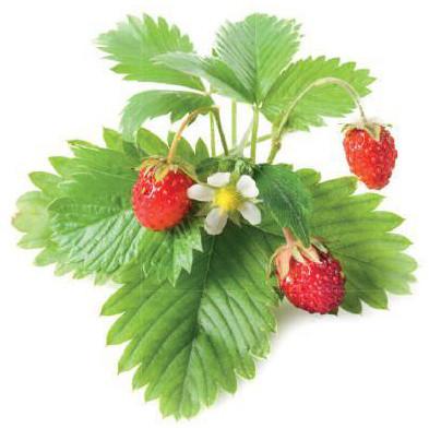 Click and Grow Smart Garden sazenice Lesní jahody