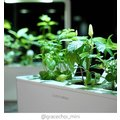 Click and Grow Smart Garden sazenice Chili papričky