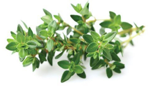 Click and Grow Smart Garden sazenice Tymián